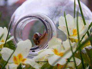 snail in a plastic bottle