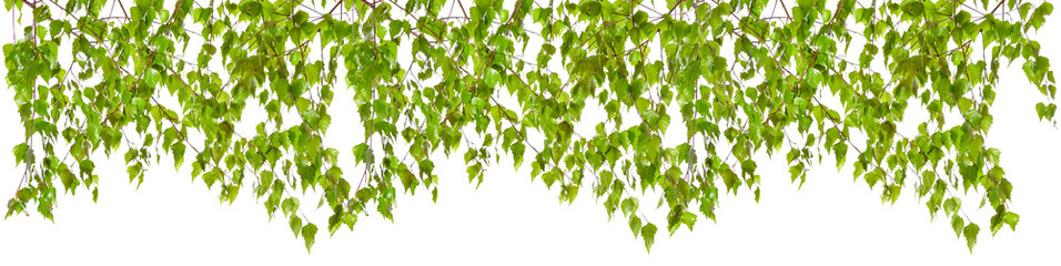 Decoration of birch twigs with leaves in a row on a white background.