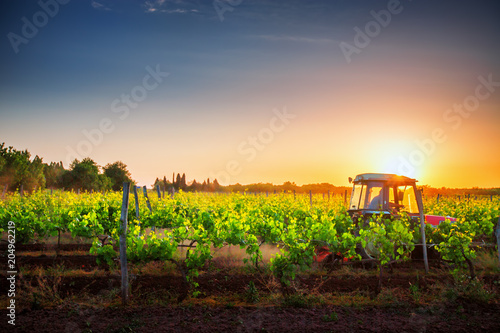 Wall mural Vines on the field and a red tractor at sunset