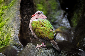 Wet colorful bird perched on a rock