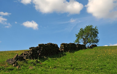 a single tree growing at the top of a grass covered hill with yellow flowers with an old dry stone wall running up the slope with a bright blue spring sky with white clouds in the yorkshire dales