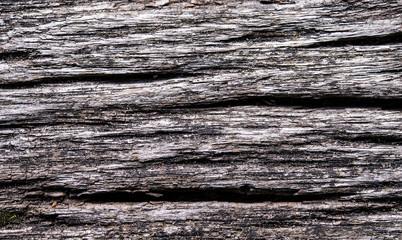 gros plan de texture de bois mort
