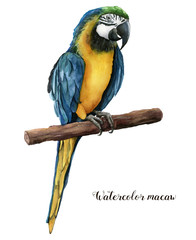 Watercolor beautiful parrot. Hand painted blue-and-yellow parrot isolated on white background. Nature illustration with bird. For design, print or background.