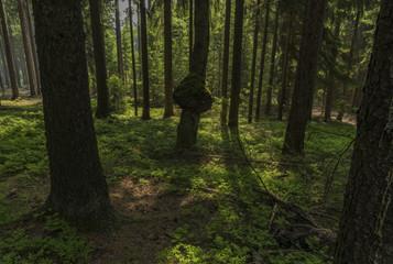 Tumour on tree in dark forest