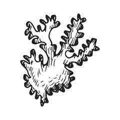 seaweed vector sketch hand drawing. isolated