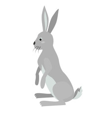 Cute hare on white background.