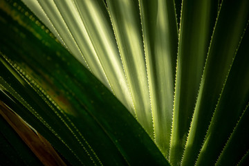 Abstract background texture formed by a palm tree leaf with bright light and drop shadow