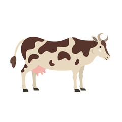 Cute cow on white background.