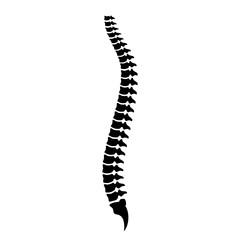 Spine cord vector icon