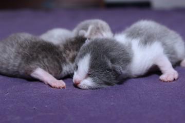 LITTER OF NEWBORN KITTENS