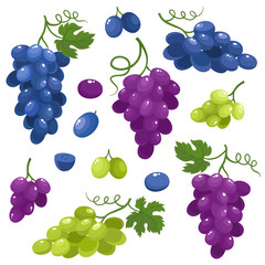 Bright vector set of juice grapes isolated on white background.
