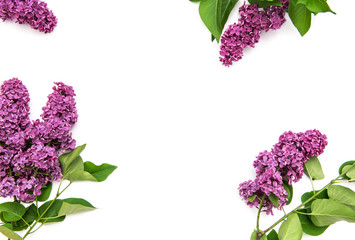 Foto auf Leinwand Flieder Lilac flowers white background Floral flat lay
