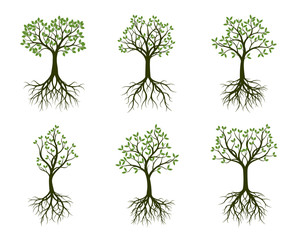 Set of green Trees with Leaves and root. Vector Illustration.