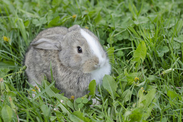 Little rabbit in green grass. Bunny in the meadow