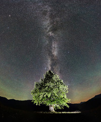 Panoramic view of illuminated lonely high tree under incredibly beautiful starry night sky and Milky way in the mountains. Astrophotography