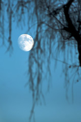 a full moon on the sky is viewed through blurred branches of the tree