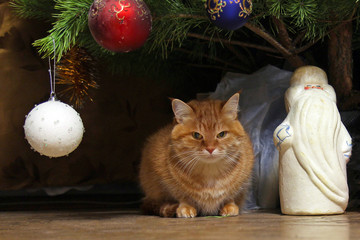 ginger cat sits under the New Year's decorated Christmas tree next to the white figure of Santa Claus