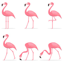 Canvas Prints Flamingo Flamingos, various poses of flamingos.