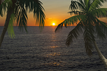 sunset sea sun and illustration palm