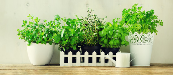 Green fresh aromatic herbs - melissa, mint, thyme, basil, parsley in pots, watering can on white and wooden background. Banner. Aromatic spices, herbs, plants frame with copy space.