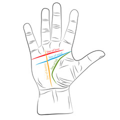 chiromancy hand with lines of life, love, mind and destiny. palmistry vector drawing illustration