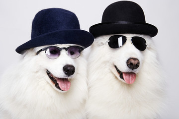 Cute doggy family in hats and sunglasses