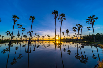 Silhouette of Twin Sugar Palm Tree with Sunstar. Reflection on the water.