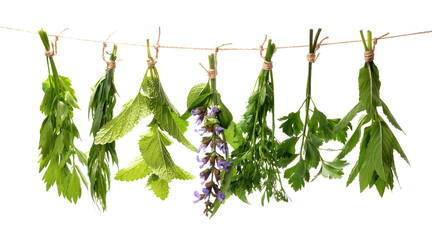 Set of fresh herbs hanging  on an isolated white background.