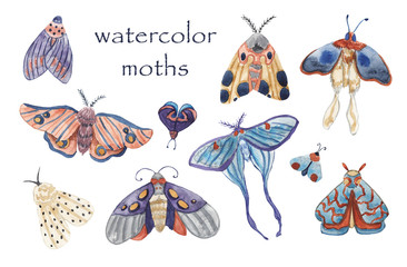 Set of watercolor moths on white isolated background