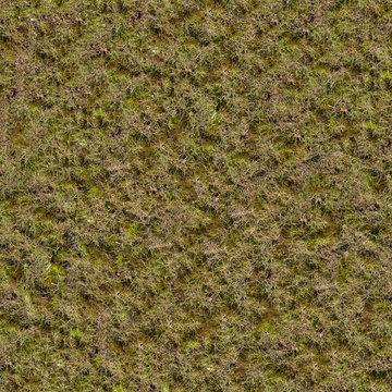 Grass with Moss. Seamless Texture.
