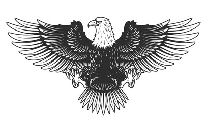 Eagle isolated on white vector illustration.