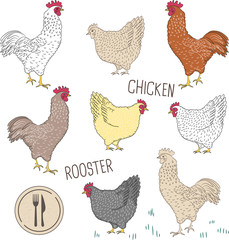 Set isolated on white background with bird - rooster and chicken and green grass vector illustration for wallpaper and food background. Cocks and hens