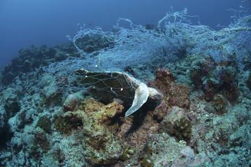 Ocean Environmental Destruction / Ocean Protection / Dead Sea Turtle in a fishing net