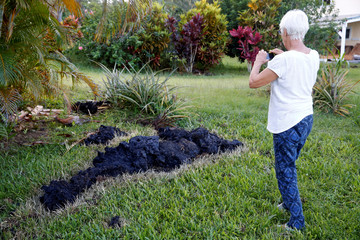 Patricia Spinoza, of Puna, takes a photo of lava on a lawn  on the outskirts of Pahoa