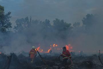 Firefighters try to extinguish a bush fire on peatlands in Pekanbaru