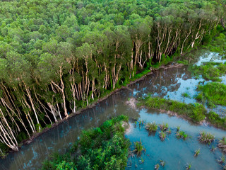 aerial view of the rubber tree plantation