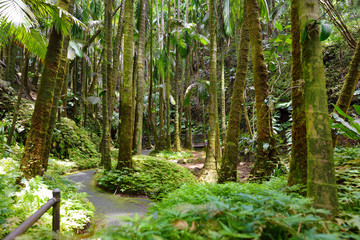 Lush tropical vegetation of the Hawaii Tropical Botanical Garden of Big Island of Hawaii