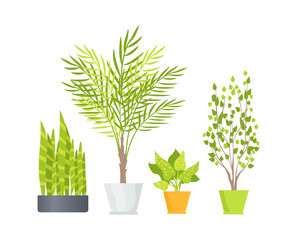 Indoor Floor Plants in Pots Isolated Illustrations