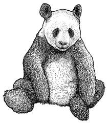 Giant Panda illustration, drawing, engraving, ink, line art, vector