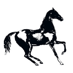 Black horse silhouette with hand drawing grunge artistic texture. Vector art style. Equestrian sport illustration.