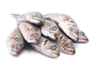 Fish horse mackerel