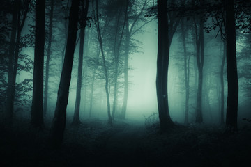 dark foggy road, scary woods landscape