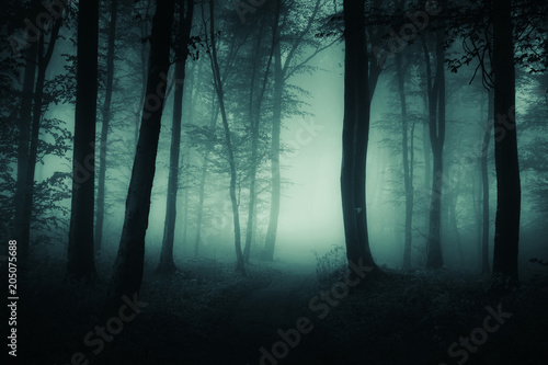 Dark Foggy Road Scary Woods Landscape Stock Photo And