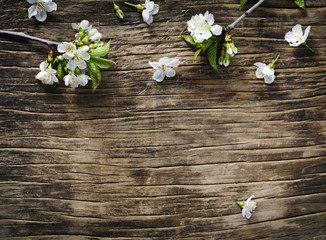 Spring background with  pear blossom flowers.