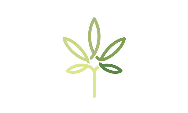 CBD Cannabis Marijuana Pot Hemp Leaf with Line Art style Logo design