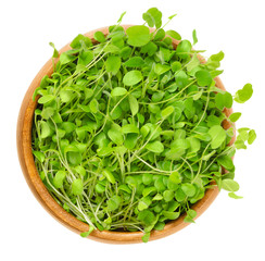 Crimson clover microgreen in wooden bowl. Young plants, seedlings, sprouts, shoots and cotyledons of Trifolium incarnatum, also called Italian clover. Macro food photo close up from above over white.
