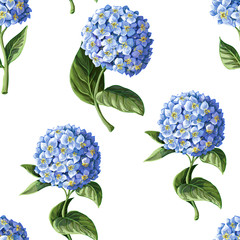 Seamless pattern with Hortensia on a white background. Vector illustration