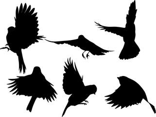set of six black flying tits on white