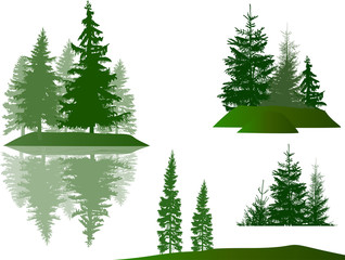 set of four green pines and firs compositions