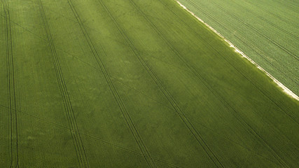 Aerial view of a completely green agricultural field before harvesting. A rural road runs through the farm. Ideal for textures and patterns.